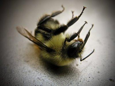 Abeilles : le rôle des pesticides confirmé dans leur surmortalité